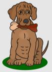 Hund_Knochen