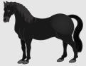 Pferd_schwarz