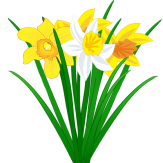 Narzissen_Narcissus_2