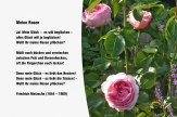Meine Rosen – Friedrich Nietsche