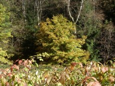 Herbst – Natur – Wald 13