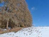 Winterbilder – Wald 13